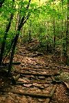 path-in-the-woods