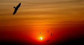 Soar on to writing success